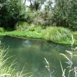 fly-creek-fishing